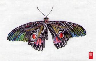 butterfly_black_white_335_horitama