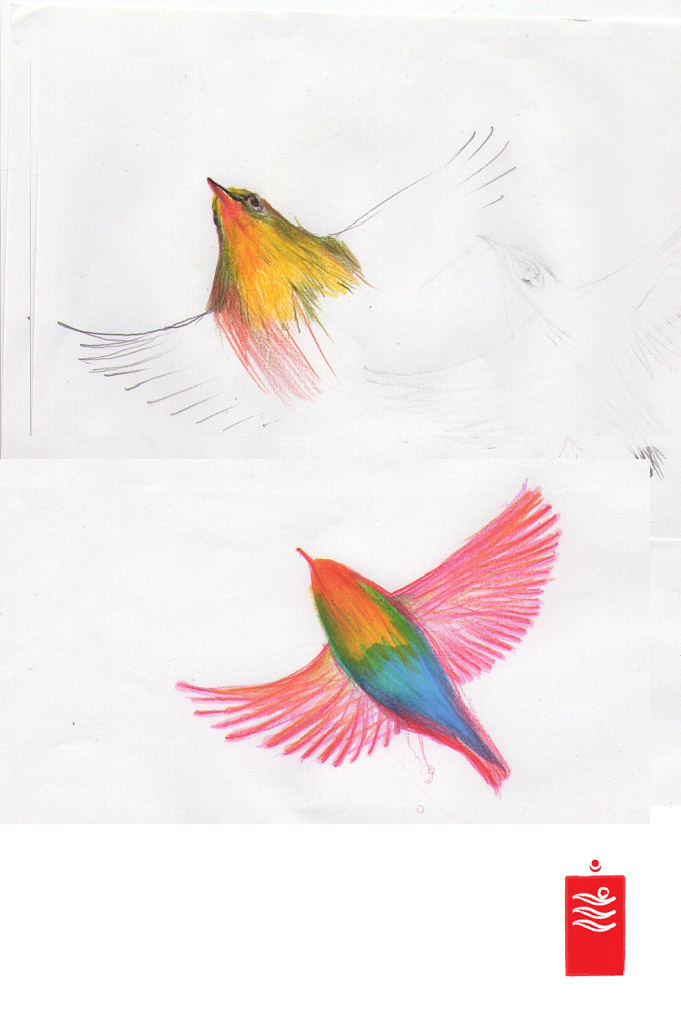 Bird Colour Study