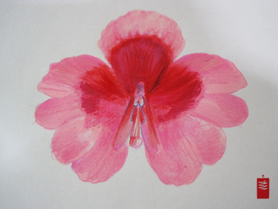 pink_butterfly_orchid_tattoo