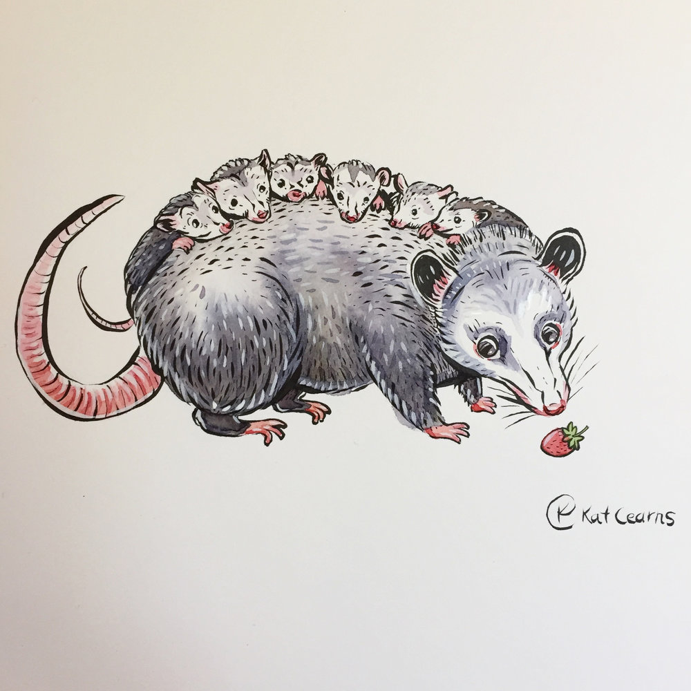 Momma Opossum with Pizzazz