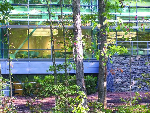 CORPORATE HEADQUARTERS THRU TREES - OOMBRA ARCHITECTS