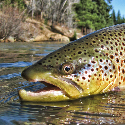 BADGER BASIN WILDLIFE AREA - HartselSlow, meandering river that is seasonally good for browns and rainbow trout. More Info >
