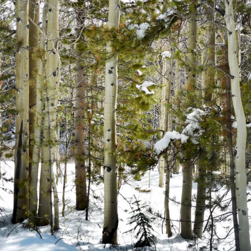 Beaver Creek Trailhead - 2 mi | EasyFairplayIf you're looking for no crowds and somewhere to play outside in the mountains year around, this is it. Discover winter travel routes which incorporate parts of the Beaver Creek Road (659) with some travel through the forest. More Info >
