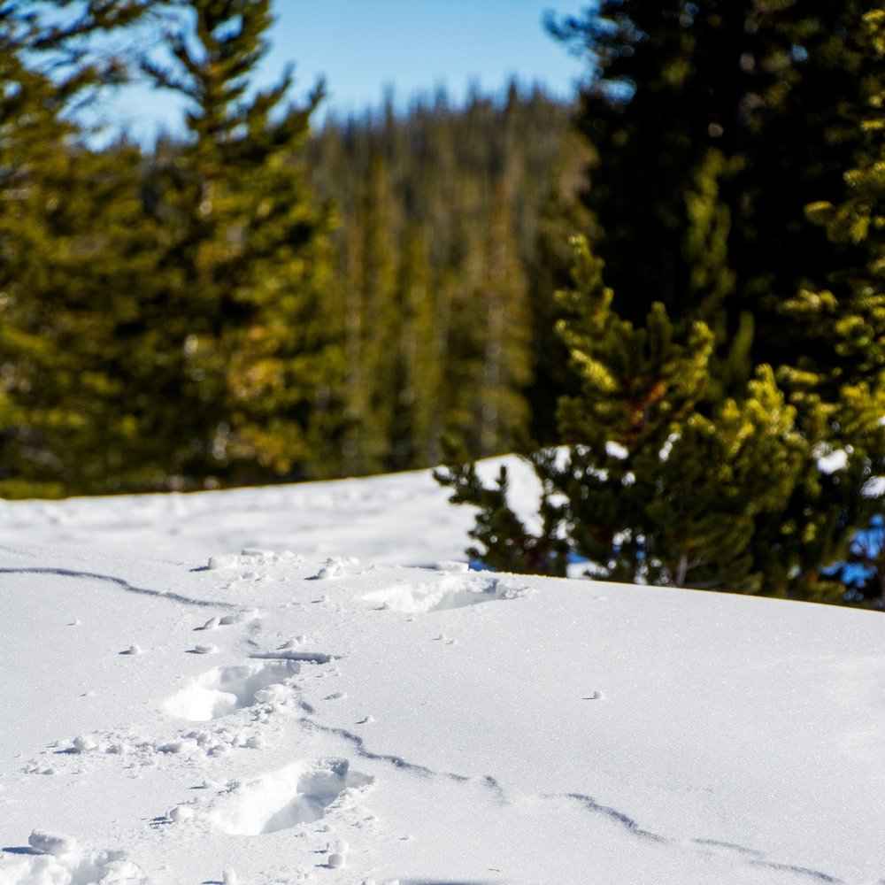 From the blog - Explore Cross Country Ski and Snowshoe Trails near Denver