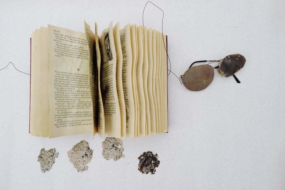 rockglasses,bk.jpg