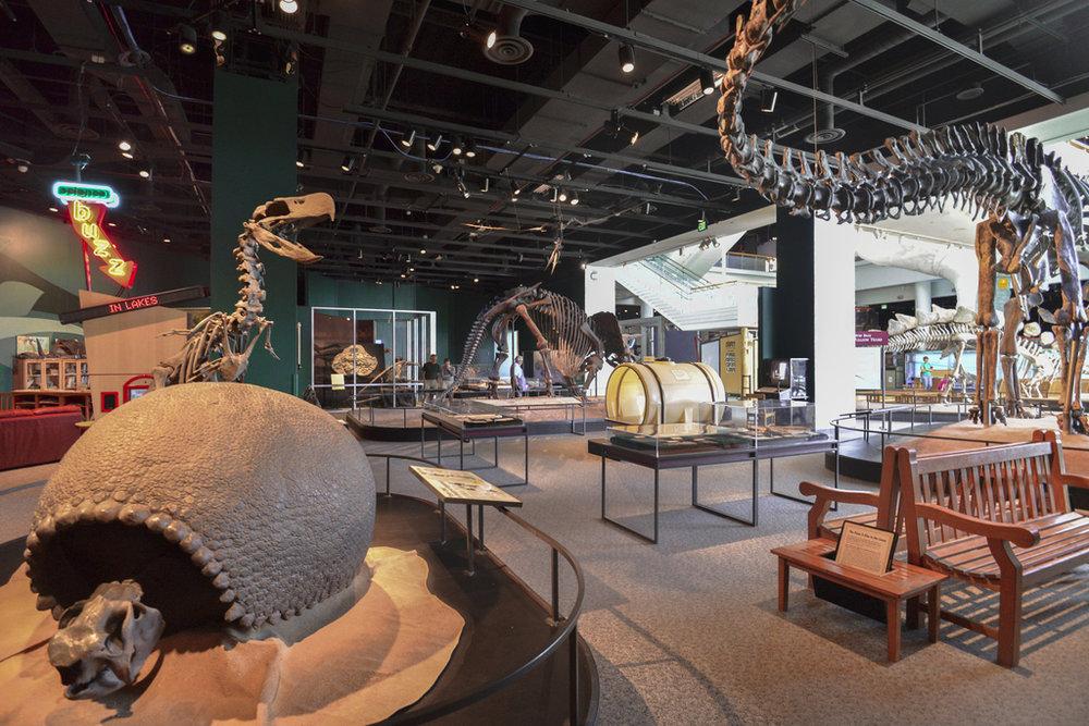 Paleo Exhibit