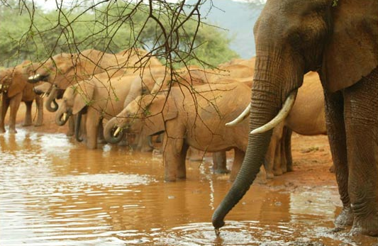 D  avid Sheldrick Wildlife TRust   David Sheldrick Wildlife Trust rescues orphaned and abandoned wildlife in Africa, with a focus on young elephant care and rehabilitation.    learn more