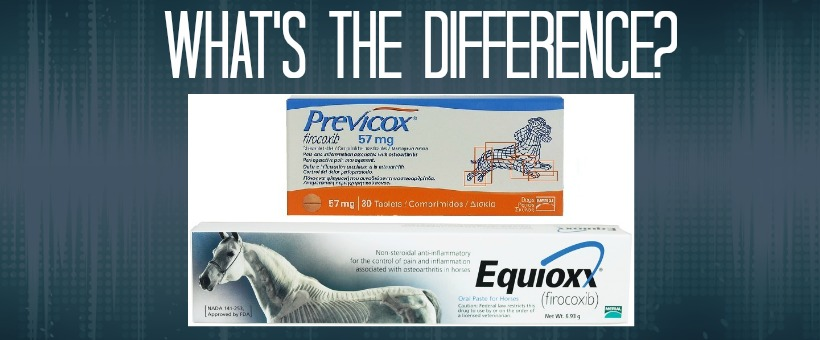 19 Elegant Previcox for Dogs Dosage Chart