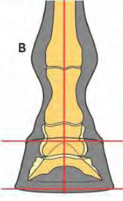 Medial/Lateral Relationship
