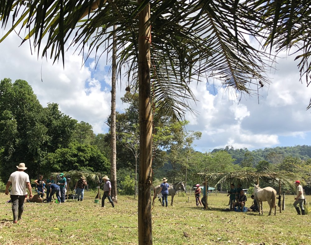 The typical scene at a community clinic day. A castration is being performed on the left, and one of our triage teams is hard at work on the right.
