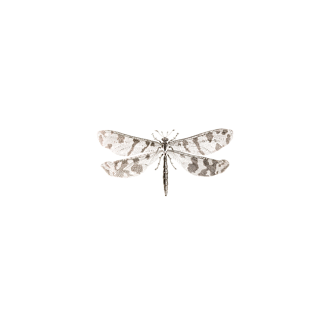 dragonfly-1525836_640.png