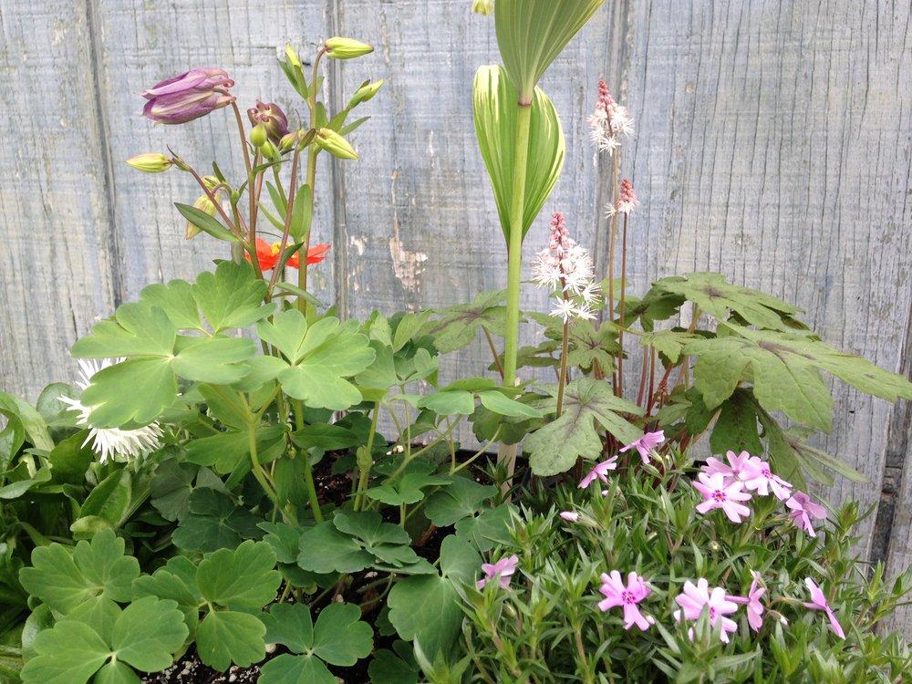 perennials spring.JPG