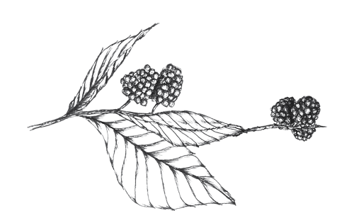 Twig-+-Briar_blackberry-sprig.png