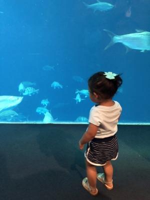 Mila aquarium.JPG