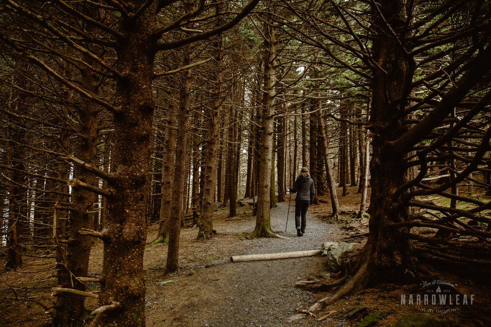 Hiking-Big-Bald-Mountain-Appalachian-Trail-in-Tennessee-Narrowleaf_Love_and_Adventure_Photography-3218.jpg