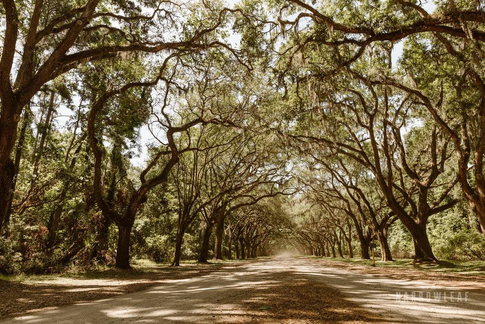 wormsloe-plantation-savannah-georgia-elopement-photographer-Narrowleaf_Love_and_Adventure_Photography-0557.jpg