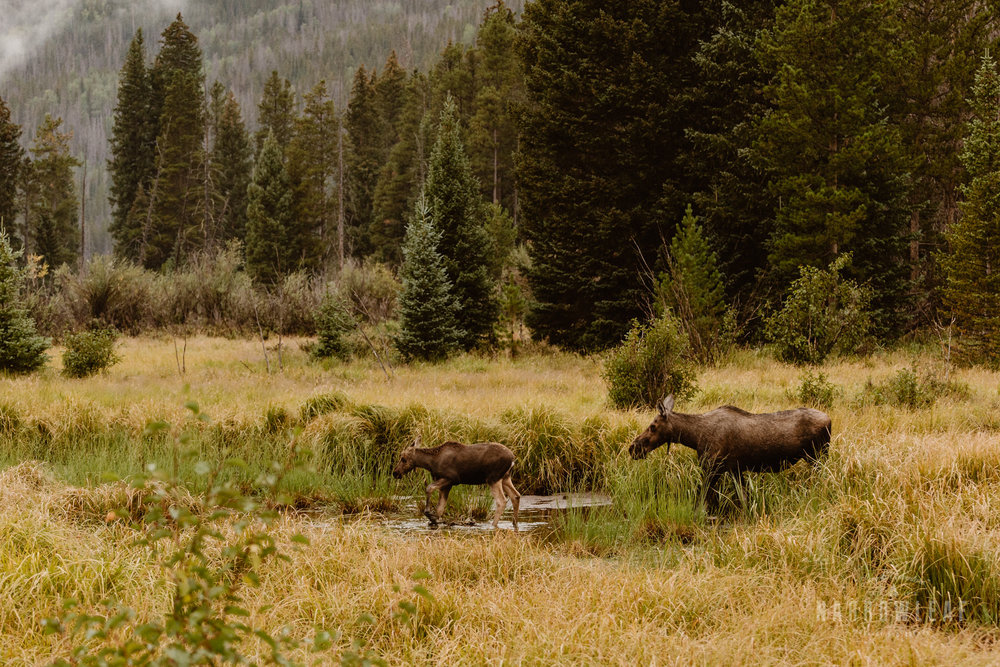 colorado-adventure-photographer-camping-rocky-mountains-Narrowleaf_Love_and_Adventure_Photography-4468.jpg