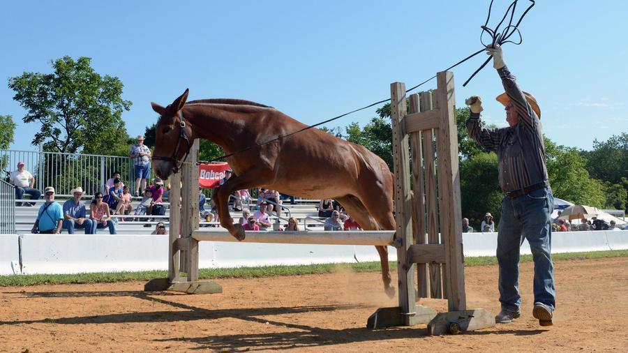 Coon Mule Jump.jpg