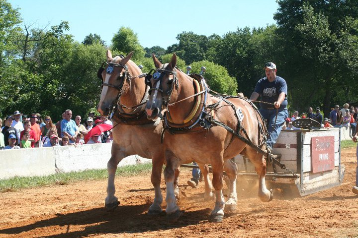Horse Pulling Contest.jpg
