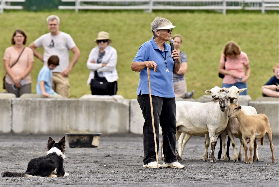 SHEEP DOG DEMONSTRATIONS.jpg