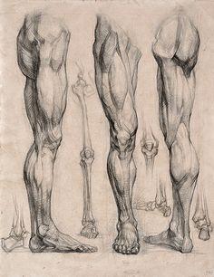 971bdefe2f6b7bf9b6451fb7f436db73--anatomy-art-human-anatomy.jpg