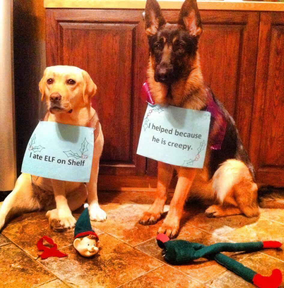 dog eats elf