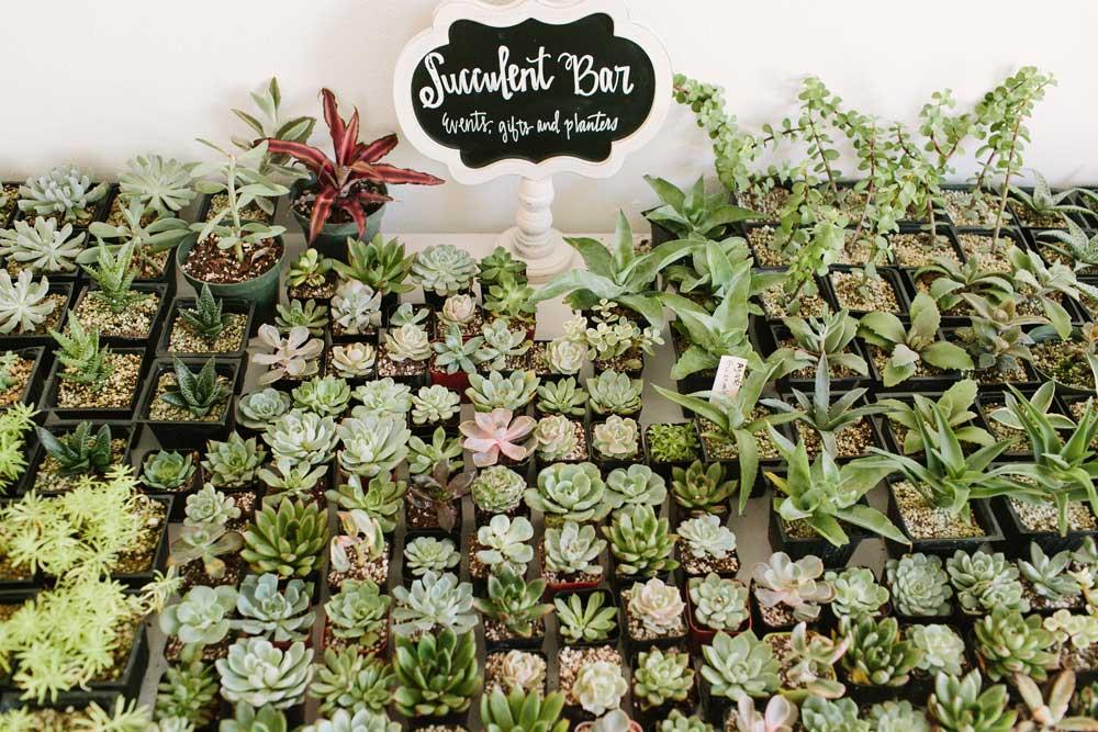 Succulent-Pic-web.jpg