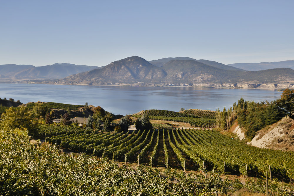 Naramata Vineyard