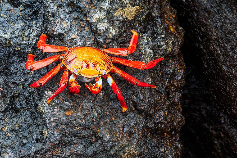 CrabCrack.jpg