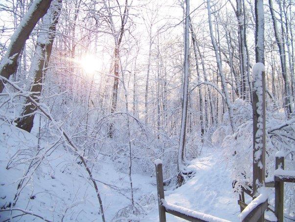 fatima in winter trails.jpg