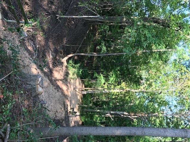 trail 4.jpg