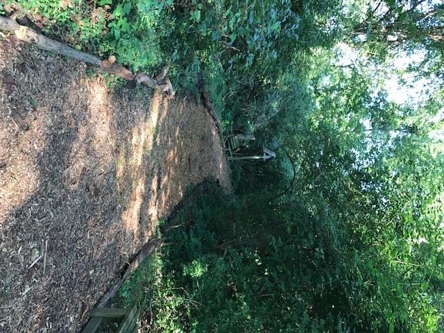 trail 19.jpg