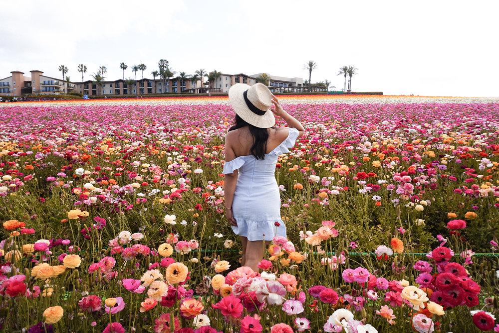 flower fields4.jpg