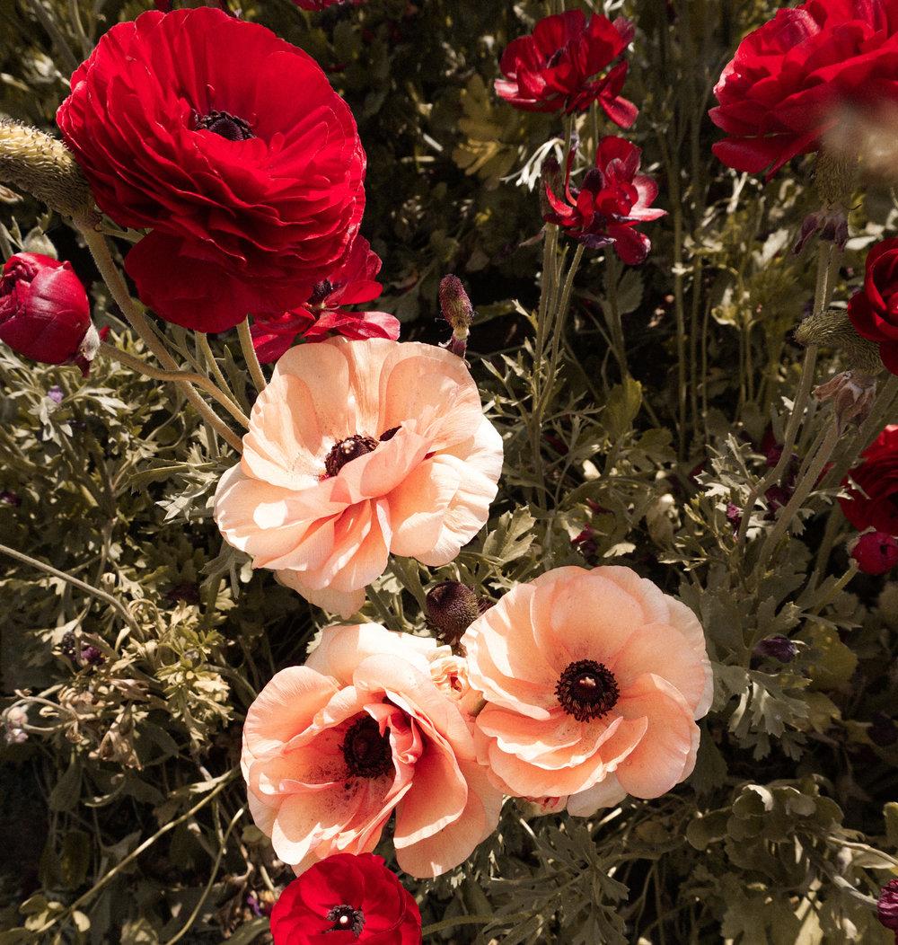 flower fields 6-1.jpg