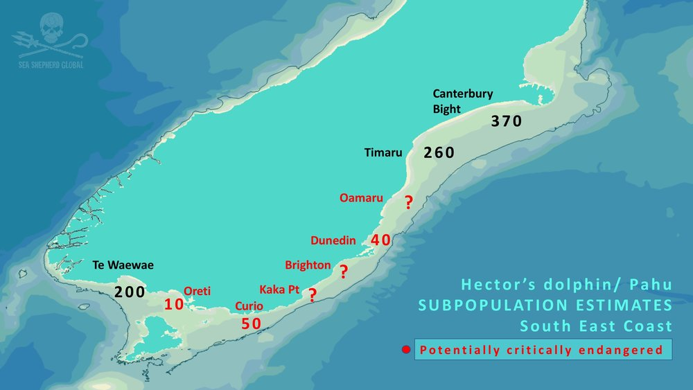 South East Subpopulation Estimates for Hector's Dolphins - graphic.jpg