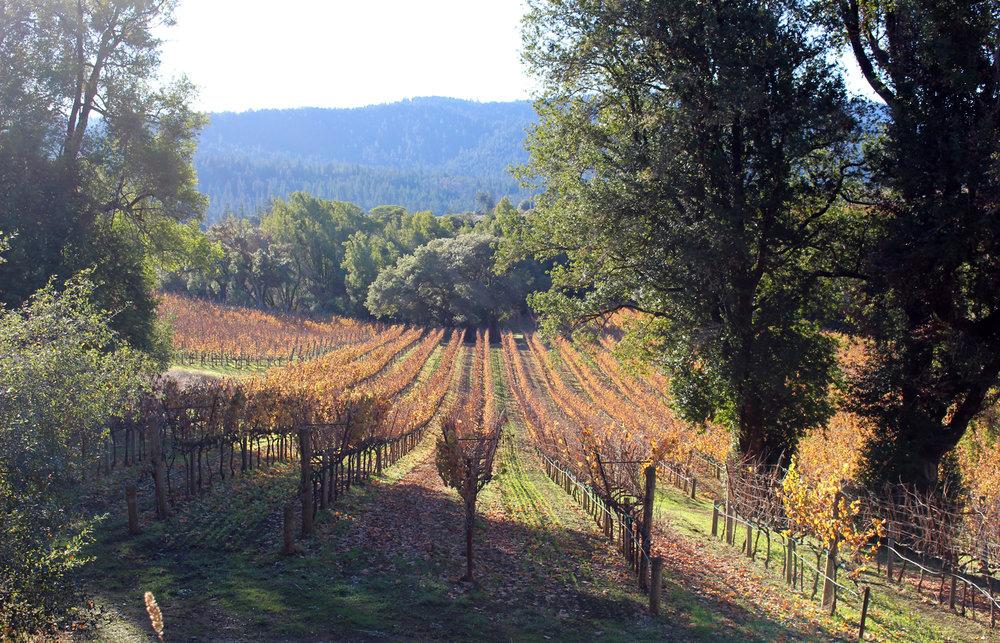 Vineyard Napa