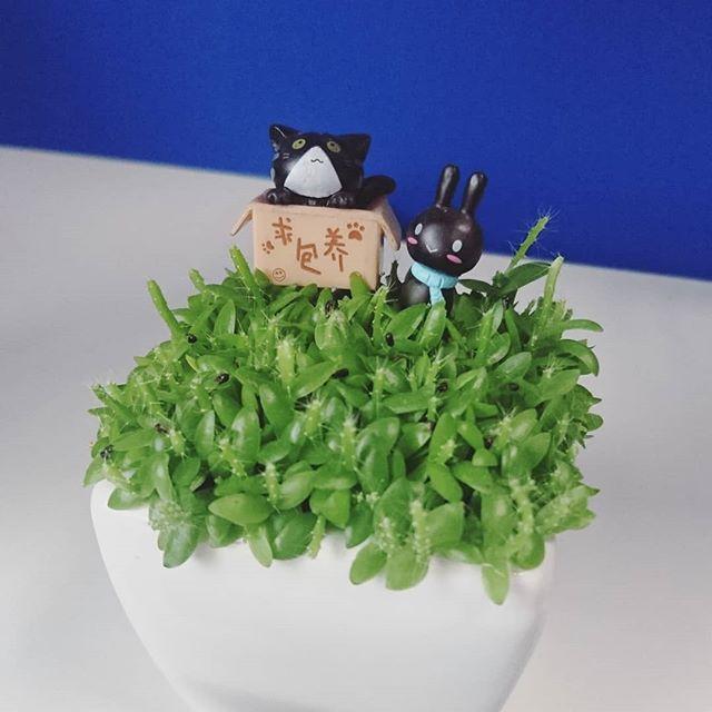 My #minimalist plant, Kuroneko