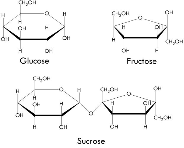 Glucose,+Fructose+&+Sucrose.jpeg