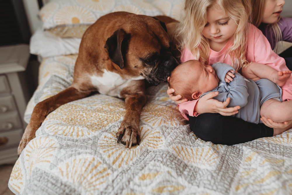 dog licking the baby's head
