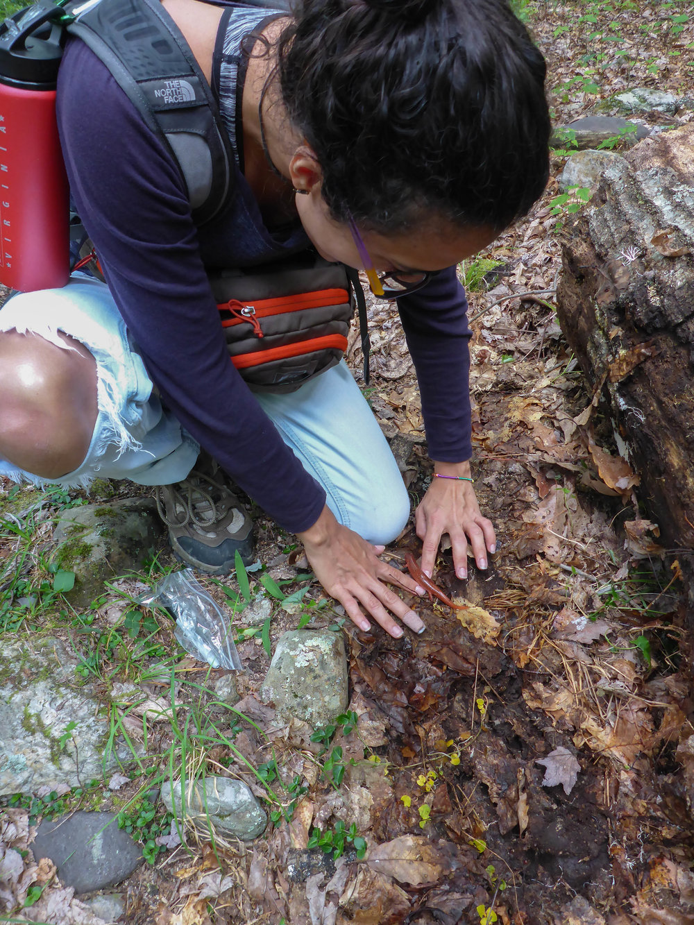 Osmary's 1st red salamander