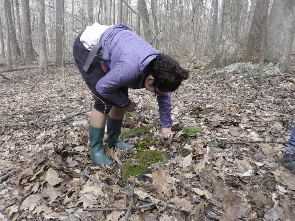 Melissa looking for salamanders