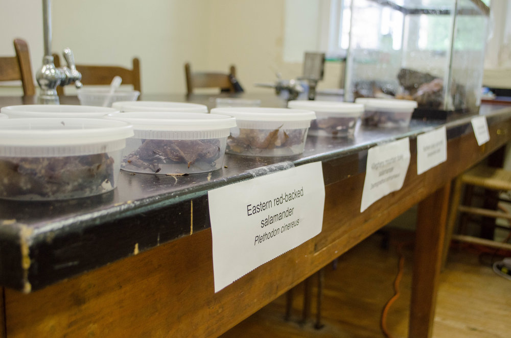 Novarro Lab Salamander Exhibit at an open house event