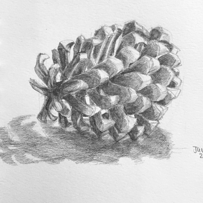 PineCone1.png