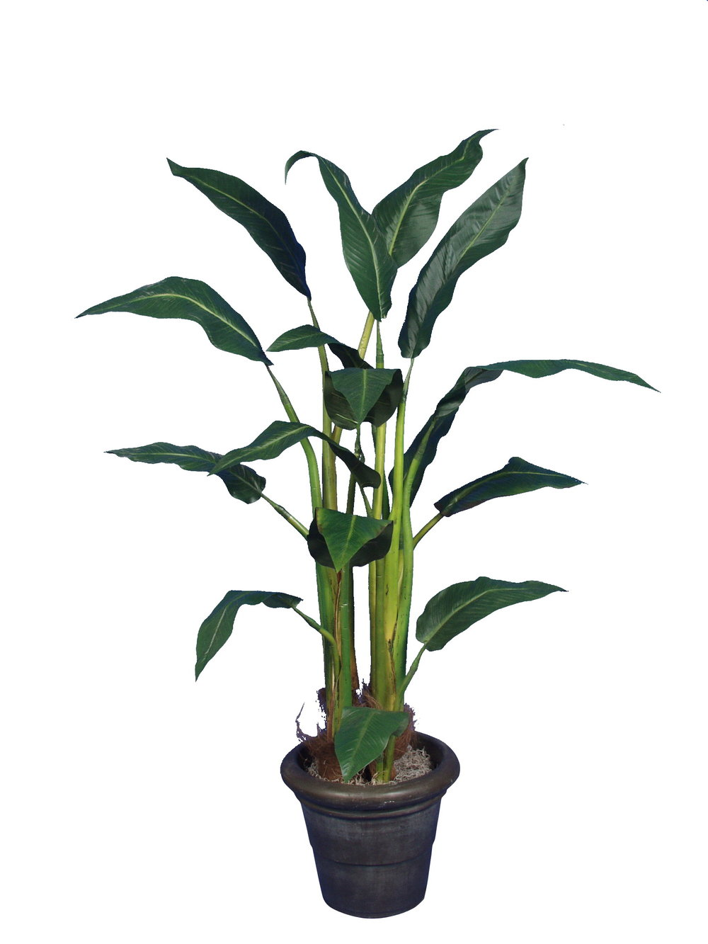 PL370 Banana Leaf Palm