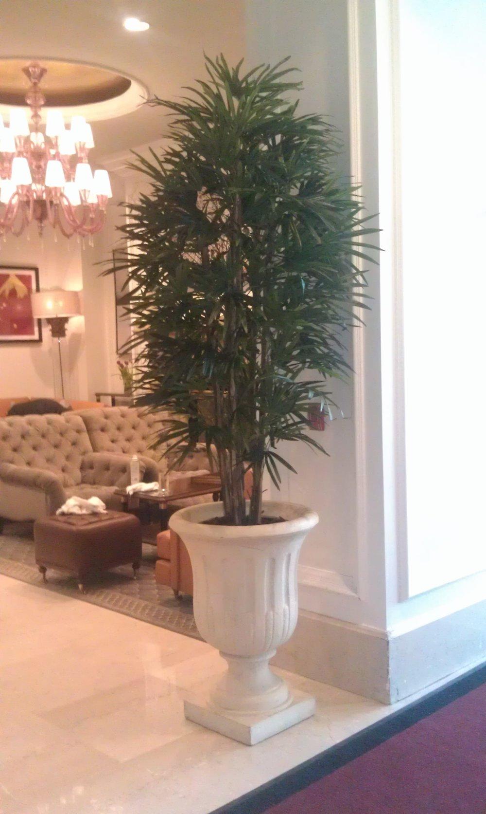 PL335 Raphis Tree
