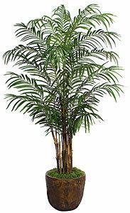 PL377 Areca Palm