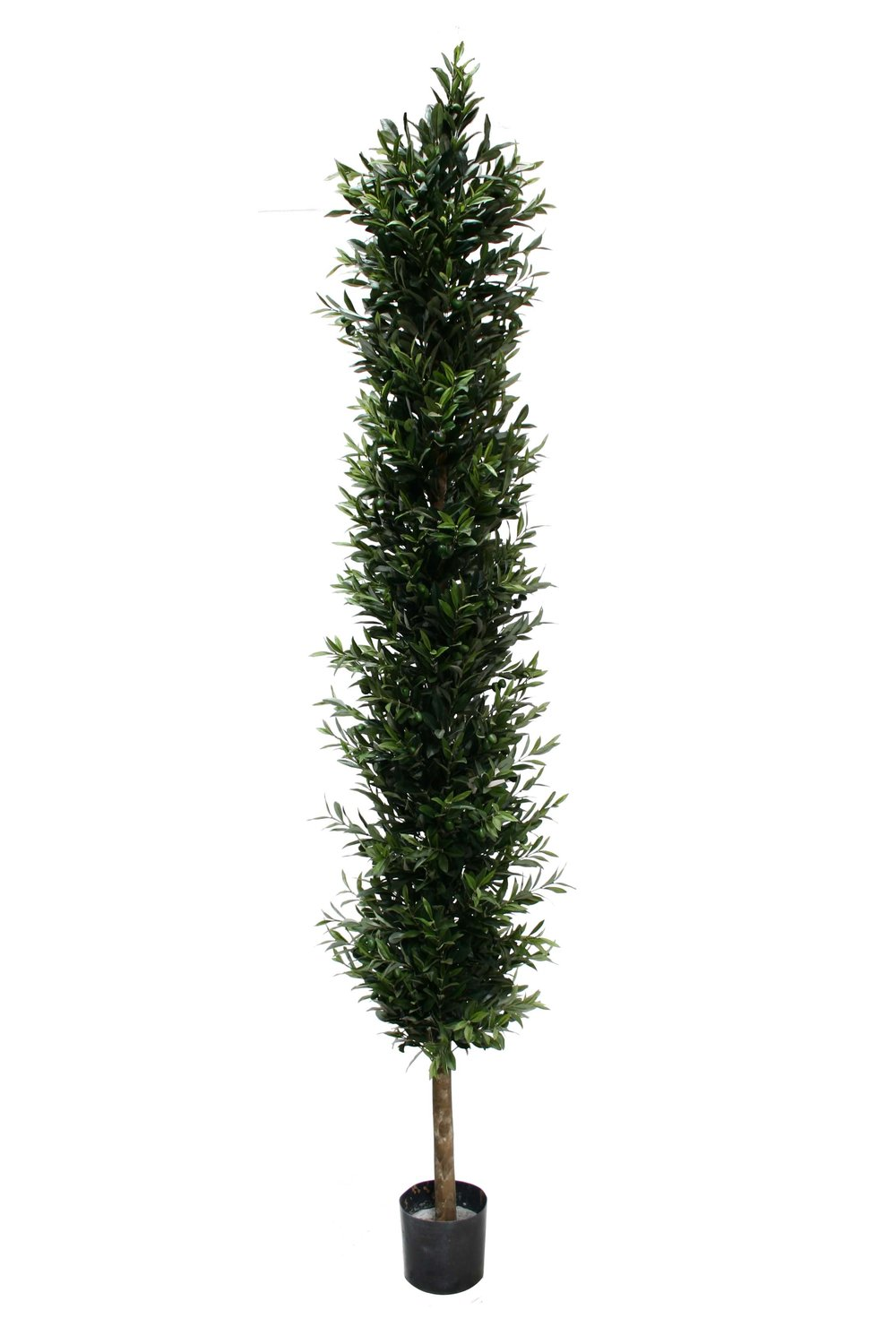 Cypress Tower hedge