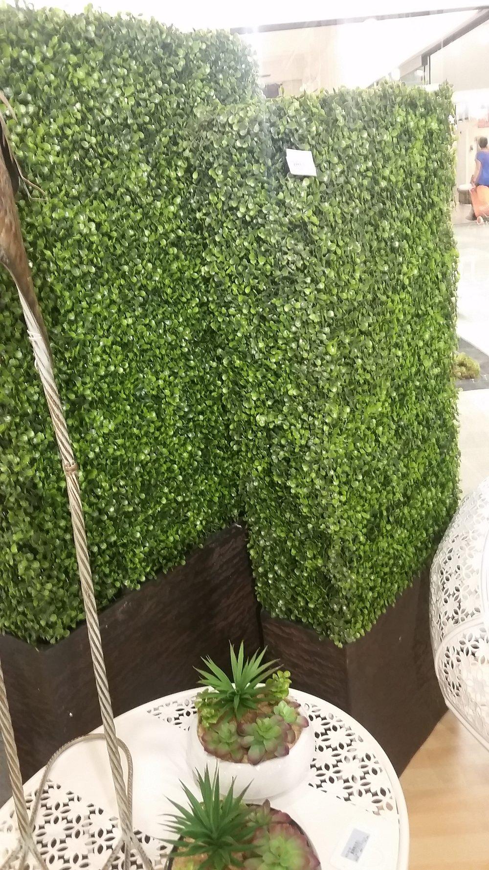 Boxwood Hedge Planter