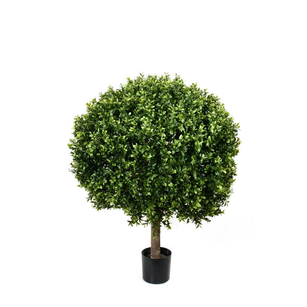 Boxwood Topiary ball