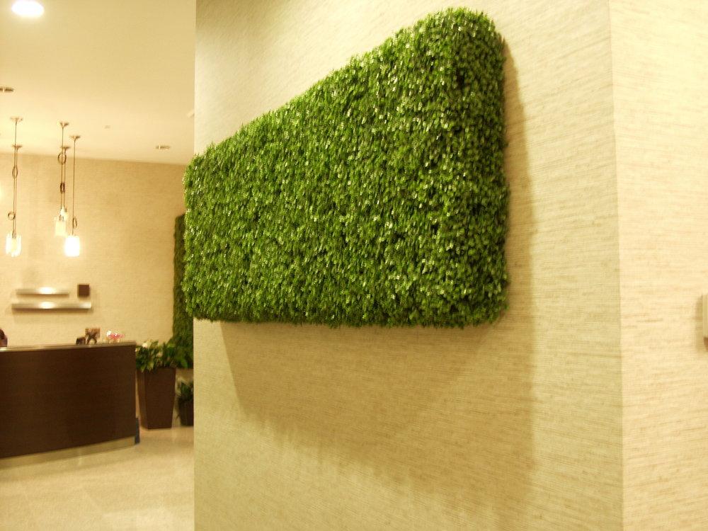 Boxwood Wall Hedge